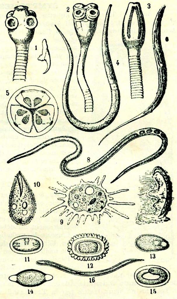 Les produits de lalimentation contre les helminthes