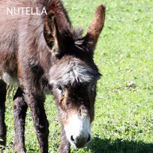 Nutella_2
