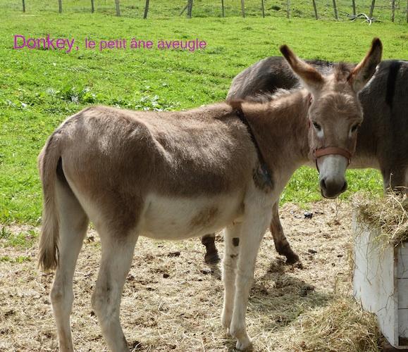Tém. Journées bénévoles - Donkey
