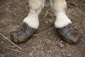 pieds_KATI