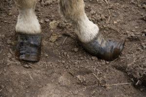pieds_KATI2